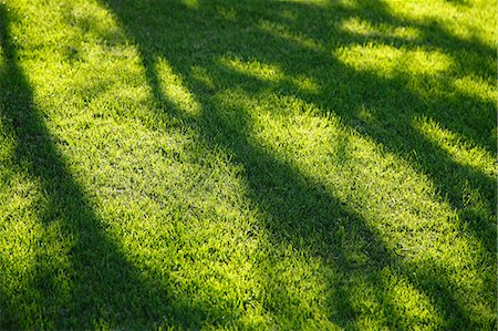 shadow - Tree shadows on lawn Stock Photo - Premium Royalty-Free, Code: 622-07117578
