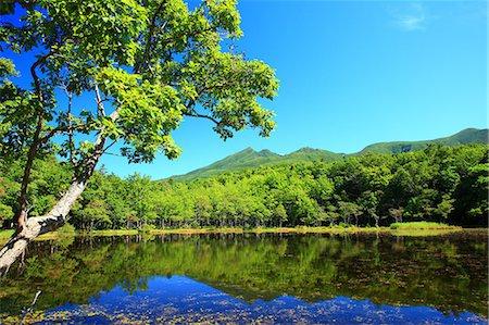fall trees lake - Shiretoko five lakes, Hokkaido Stock Photo - Premium Royalty-Free, Code: 622-07117626