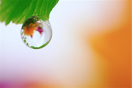 droplet - Water droplet on leaf Stock Photo - Premium Royalty-Free, Code: 622-07117955