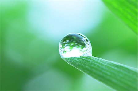 droplet - Water droplet on leaf Stock Photo - Premium Royalty-Free, Code: 622-07117958