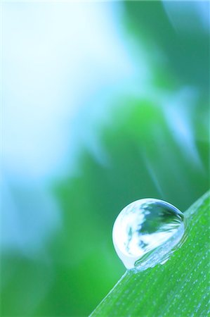 droplet - Water droplet on leaf Stock Photo - Premium Royalty-Free, Code: 622-07117959