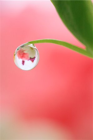 represented - Water droplet on leaf Stock Photo - Premium Royalty-Free, Code: 622-07117964
