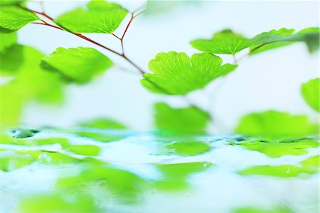 shape - Green leaves Stock Photo - Premium Royalty-Free, Code: 622-07117978