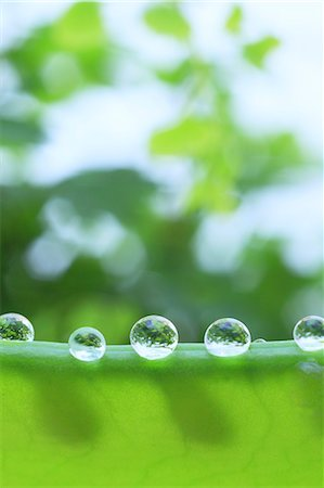 represented - Water droplets on pea Stock Photo - Premium Royalty-Free, Code: 622-07117971