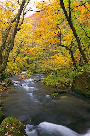 stream - Autumn leaves Stock Photo - Premium Royalty-Free, Code: 622-07519405