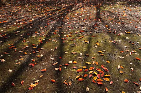 shadow - Autumn leaves Stock Photo - Premium Royalty-Free, Code: 622-07519641