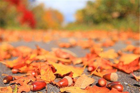Autumn leaves Stock Photo - Premium Royalty-Free, Code: 622-07519686