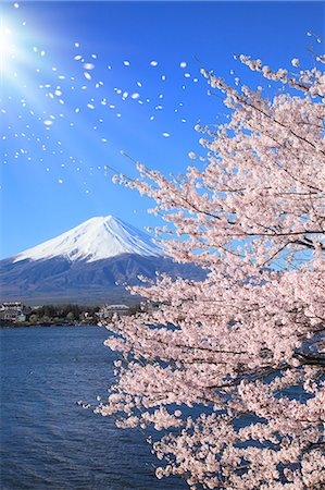 Mount Fuji Stock Photo - Premium Royalty-Free, Code: 622-07519730