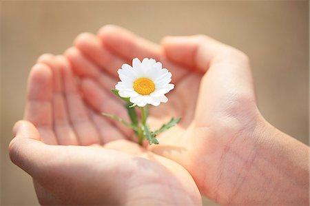 Child holding flower Stock Photo - Premium Royalty-Free, Code: 622-07519762