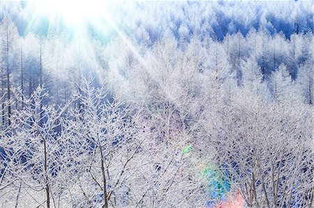 fantastically - Rimed trees Stock Photo - Premium Royalty-Free, Code: 622-07519831