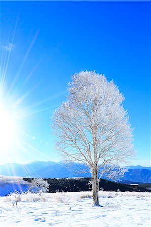 snow - Rimed tree Stock Photo - Premium Royalty-Free, Code: 622-07519894