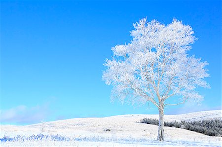 fantastically - Rimed tree Stock Photo - Premium Royalty-Free, Code: 622-07519895