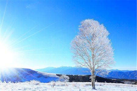 fantastically - Rimed tree Stock Photo - Premium Royalty-Free, Code: 622-07519893