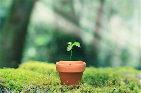 Sprouting plant Stock Photo - Premium Royalty-Free, Code: 622-07519917