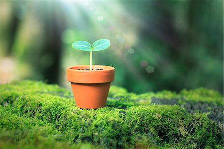 Sprouting plant Stock Photo - Premium Royalty-Free, Code: 622-07519924