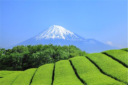 Mount Fuji Stock Photo - Premium Royalty-Free, Code: 622-07519936