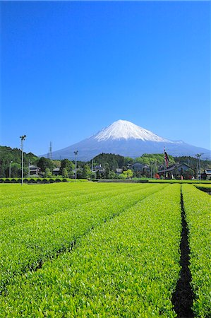 Mount Fuji Stock Photo - Premium Royalty-Free, Code: 622-07519948