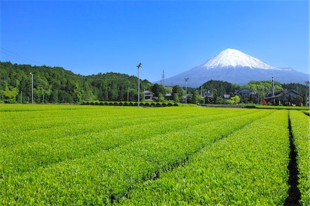 Mount Fuji Stock Photo - Premium Royalty-Free, Code: 622-07519949