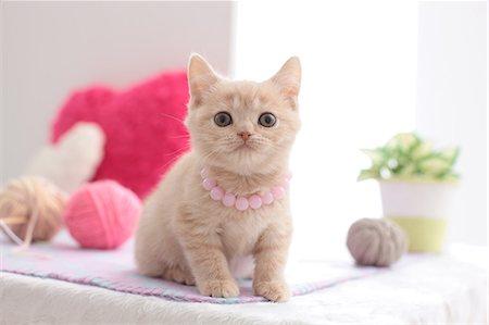 Domestic cat Stock Photo - Premium Royalty-Free, Code: 622-07810924