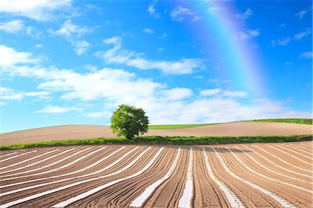 season - Hokkaido, Japan Stock Photo - Premium Royalty-Free, Code: 622-07841198