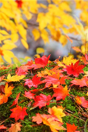 fall - Autumn leaves Stock Photo - Premium Royalty-Free, Code: 622-07841334
