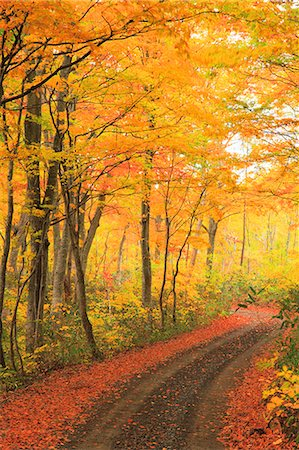 stock picture - Autumn colors, Aomori Prefecture, Japan Stock Photo - Premium Royalty-Free, Code: 622-07841348