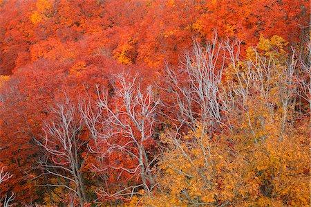 Autumn colors, Aomori Prefecture, Japan Stock Photo - Premium Royalty-Free, Code: 622-07841354