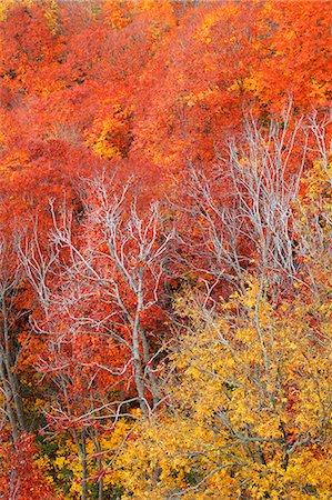 Autumn colors, Aomori Prefecture, Japan Stock Photo - Premium Royalty-Free, Code: 622-07841355