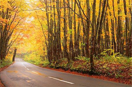 Autumn colors, Aomori Prefecture, Japan Stock Photo - Premium Royalty-Free, Code: 622-07841351