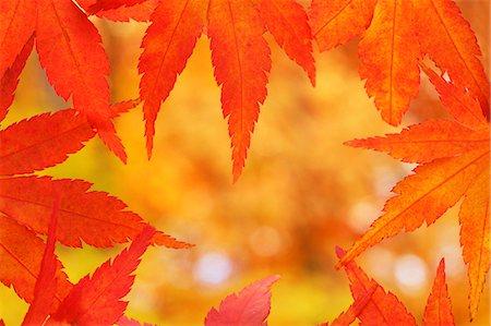 represented - Autumn leaves Stock Photo - Premium Royalty-Free, Code: 622-07841365