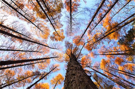 Autumn leaves Stock Photo - Premium Royalty-Free, Code: 622-07841395