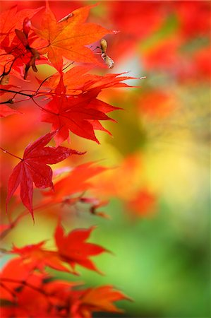 Autumn leaves Stock Photo - Premium Royalty-Free, Code: 622-07841399