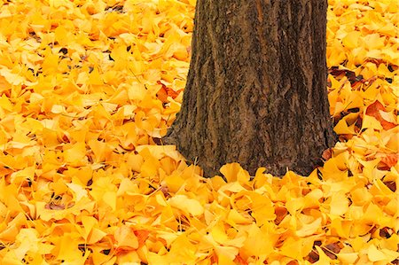 Autumn leaves Stock Photo - Premium Royalty-Free, Code: 622-07841407