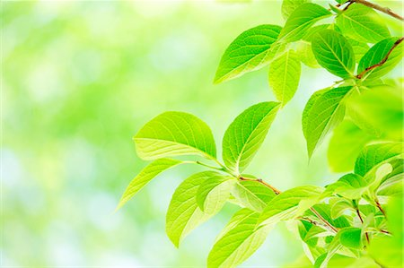spring background - Green leaves Stock Photo - Premium Royalty-Free, Code: 622-07841557
