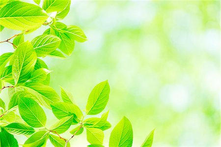 spring background - Green leaves Stock Photo - Premium Royalty-Free, Code: 622-07841558