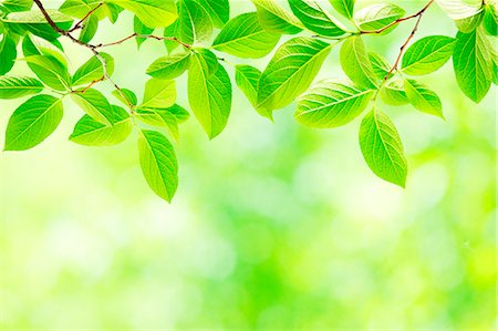 spring background - Green leaves Stock Photo - Premium Royalty-Free, Code: 622-07841559