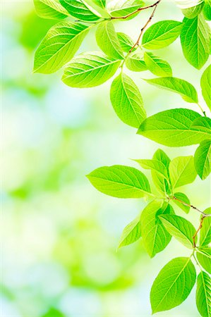 spring background - Green leaves Stock Photo - Premium Royalty-Free, Code: 622-07841560