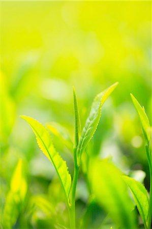 Japanese tea Stock Photo - Premium Royalty-Free, Code: 622-08065433