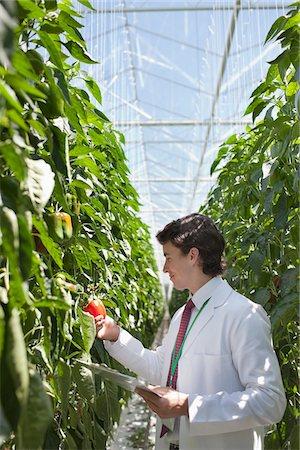 Scientist examining produce in greenhouse Stock Photo - Premium Royalty-Free, Code: 635-05550702
