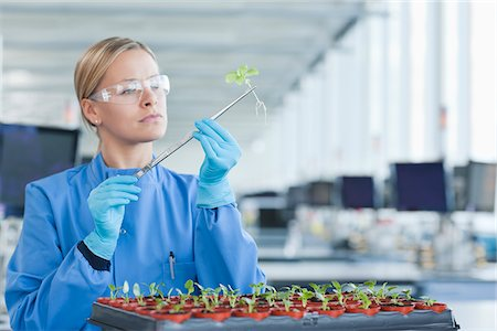 Scientist examining plants in lab Stock Photo - Premium Royalty-Free, Code: 635-05550745