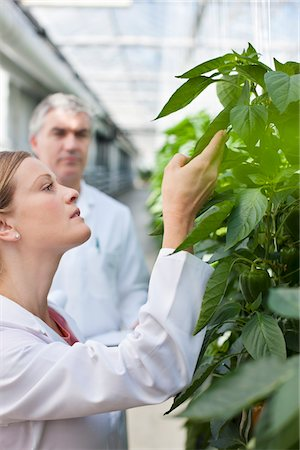 Scientist examining plants in greenhouse Stock Photo - Premium Royalty-Free, Code: 635-05550756