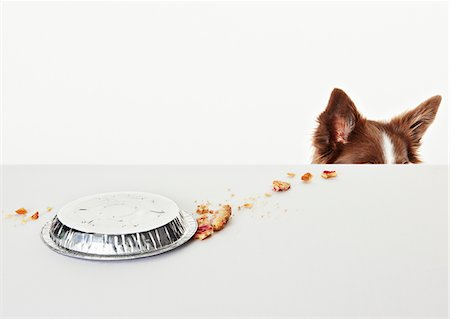 spill - Spilled pie pan on table beside dog Stock Photo - Premium Royalty-Free, Code: 635-05551101