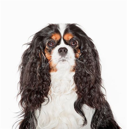 Close up of dog's face Stock Photo - Premium Royalty-Free, Code: 635-05551117