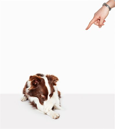 Person scolding embarrassed dog Stock Photo - Premium Royalty-Free, Code: 635-05551124
