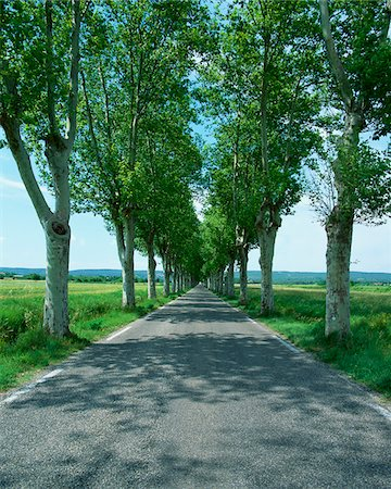 forever - Trees lining rural road Stock Photo - Premium Royalty-Free, Code: 635-05972211