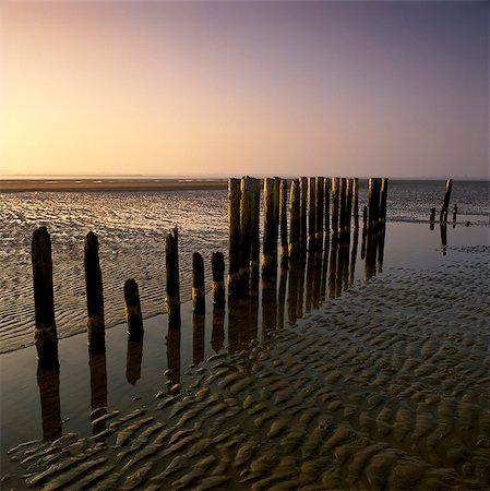 Decaying wooden posts on sandy beach Stock Photo - Premium Royalty-Free, Code: 635-05972726