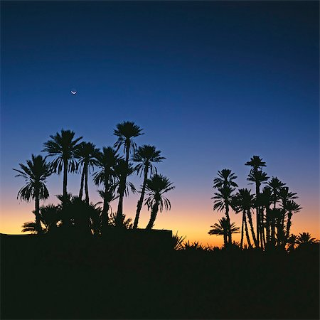 palm - Silhouette of palm trees against sunset sky Stock Photo - Premium Royalty-Free, Code: 635-05972793