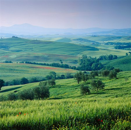 Rolling hills in rural landscape Stock Photo - Premium Royalty-Free, Code: 635-05972814