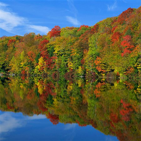 fall - Autumn trees reflected in still lake Stock Photo - Premium Royalty-Free, Code: 635-05972852