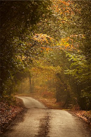 foliage - Autumn trees lining rural lane in woods Stock Photo - Premium Royalty-Free, Code: 635-06045604
